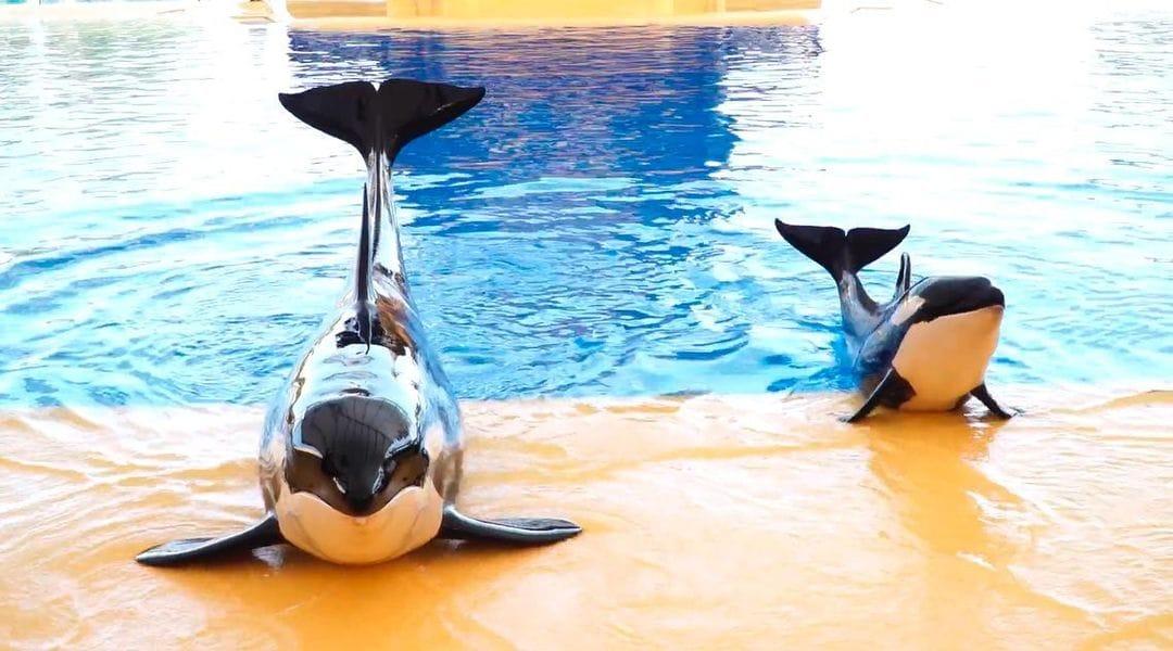 perte de poids de coup de pied de dauphin résultats de perte de poids rpm