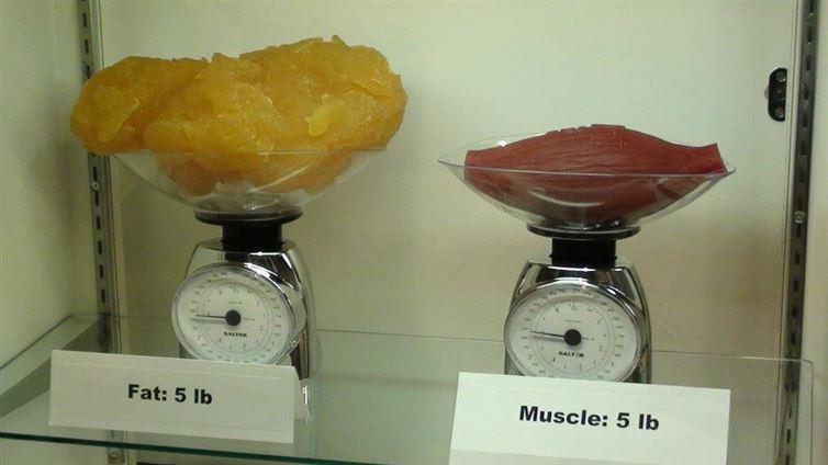 tongkat ali pour la perte de graisse cad et perte de poids