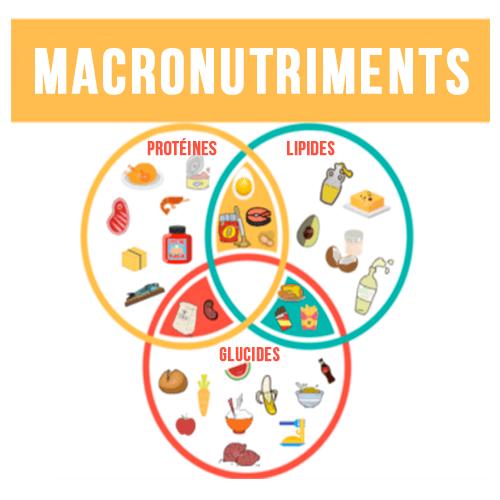 ratio de macronutriments brûlant les graisses