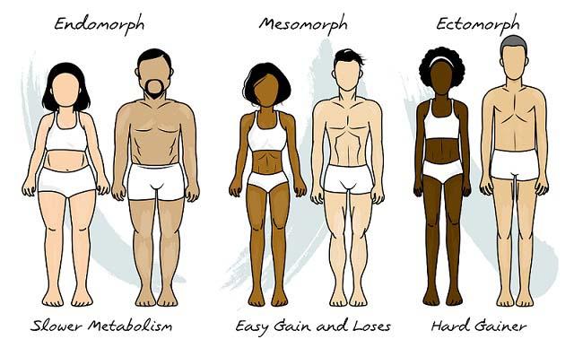 type de corps gagner du poids facilement