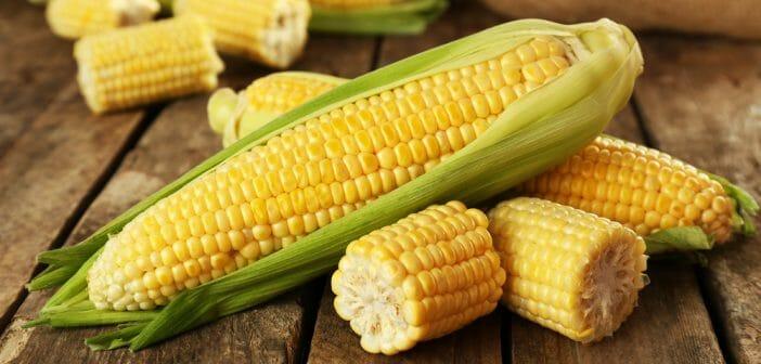 avantages du maïs pour perdre du poids quel est le mot espagnol pour perdre du poids