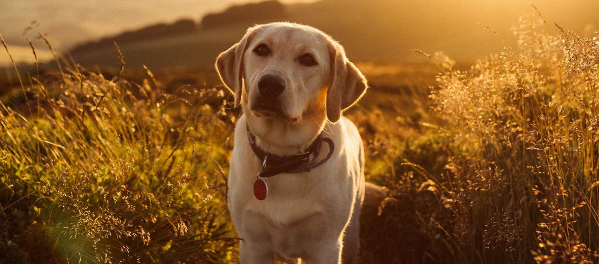 Comment faire maigrir son chien : 5 conseils à suivre