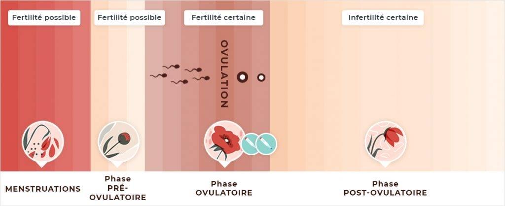 Poids et infertilité