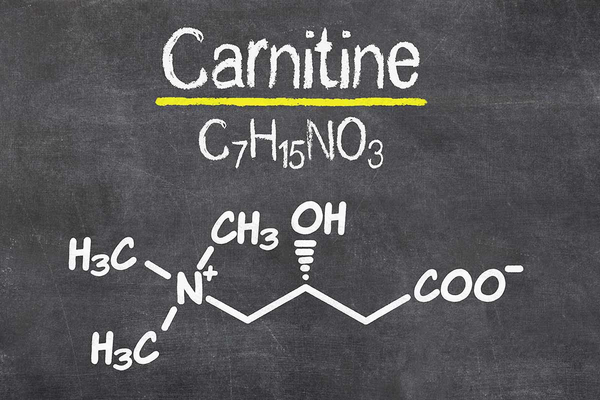 Effet performance et perte de graisse de la carnitine