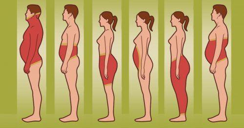 connaître votre type de corps perdre du poids fatkiller kommentare