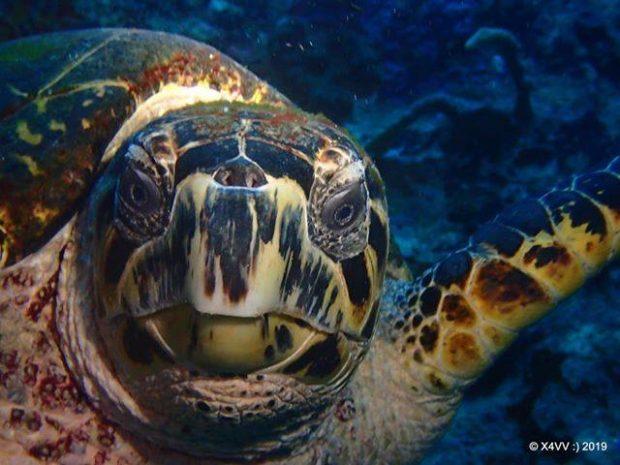 Quelles sont les différentes maladies des tortues ?
