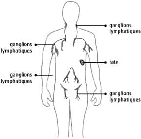 gonflement des ganglions lymphatiques de laine perte de poids