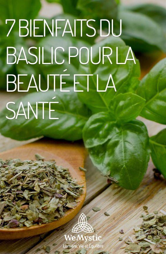 Voici une recette simple d'une infusion de basilic pour perdre du poids - gestinfo.fr