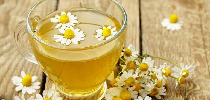 Le thé à la camomille vous aidera-t-il à perdre du poids suppléments de brûleur de graisse de Joe Weider