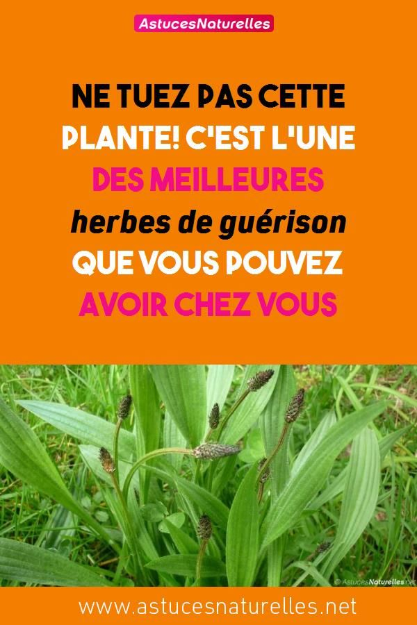 meilleures herbes naturelles pour perdre du poids