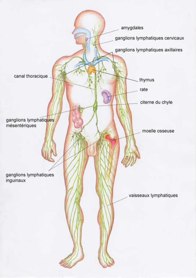 Le diagnostic du lymphome