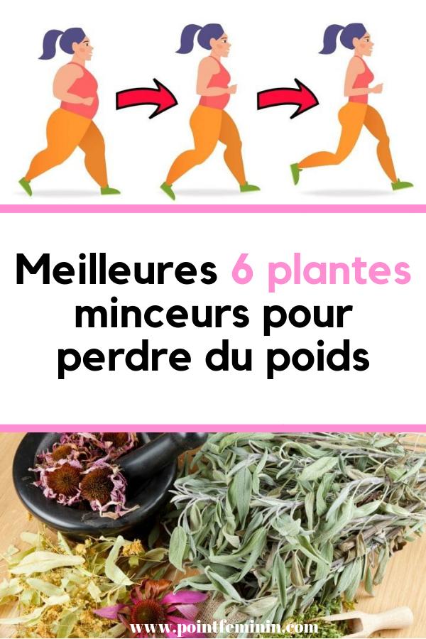 herbes naturelles les plus efficaces pour perdre du poids courtney towie perte de poids