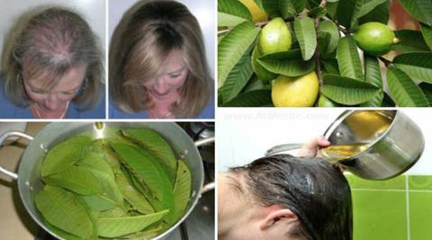 Goyave : bienfaits santé des fruits du goyavier