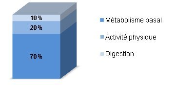 12 façons d'augmenter son métabolisme