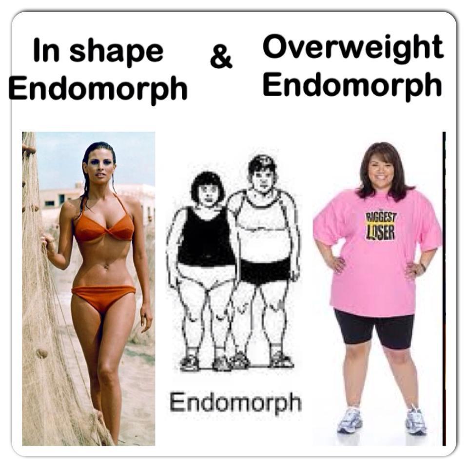 Les différents morphotypes : Endomorphe