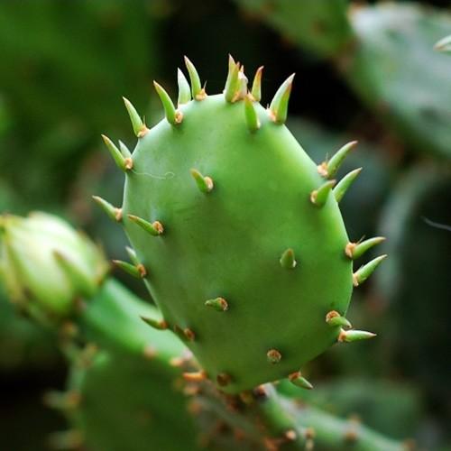 perte de poids premium harga cactus comment perdre du poids rapidement de manière saine