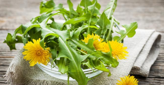 Les 12 meilleures plantes pour maigrir rapidement