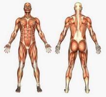 fièvre perte de poids et faiblesse