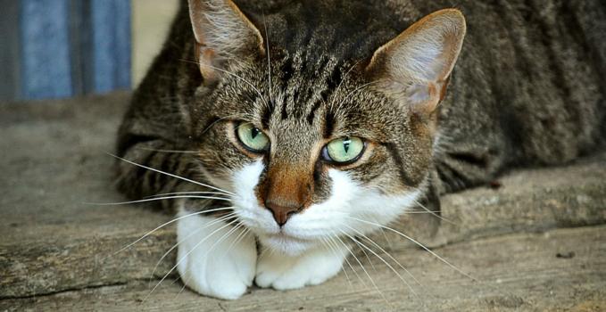 7 conseils pour faire maigrir son chat (2ème partie)