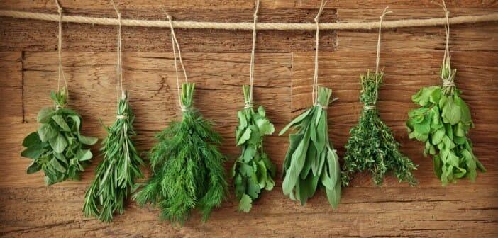 les herbes vous font-elles perdre du poids