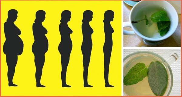Tisanes pour maigrir : les meilleures tisanes brûle-graisse
