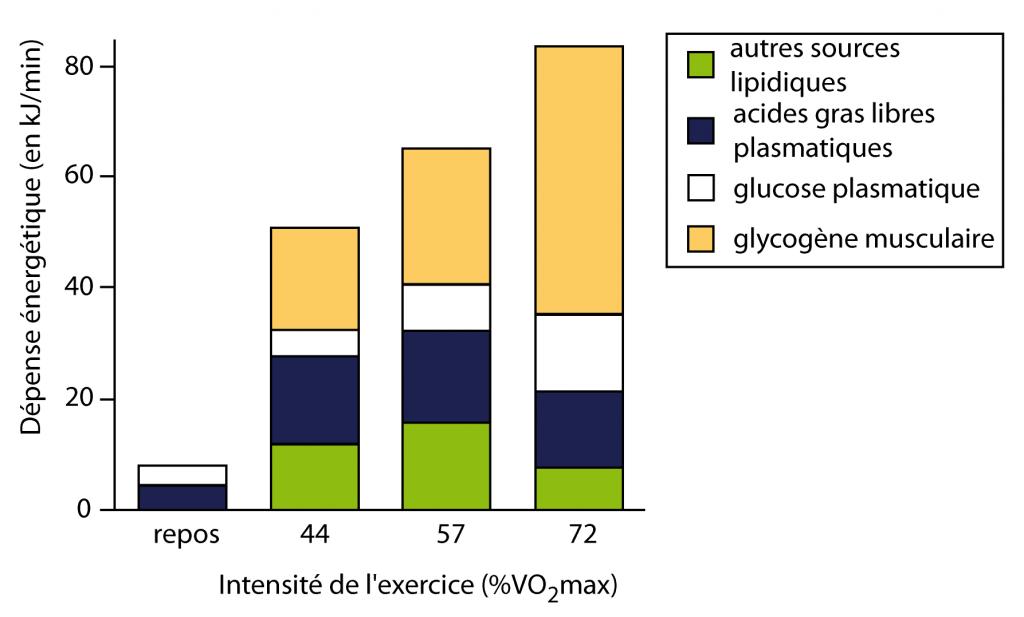 combustion des graisses vs combustion du glucose