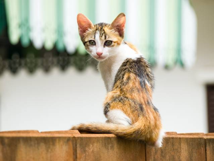 Les poids de forme idéal selon la condition et l'âge de votre chat