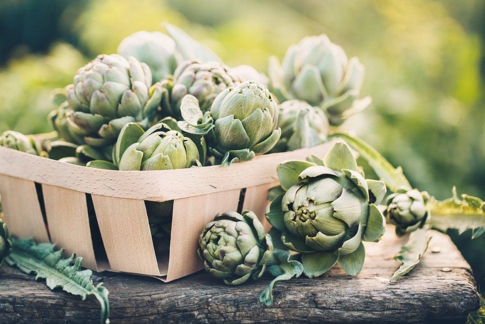 Minceur : quelles plantes pour maigrir ?