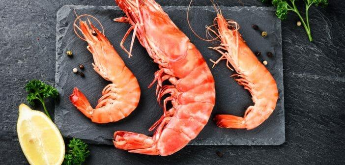 crevettes bonnes pour perdre du poids