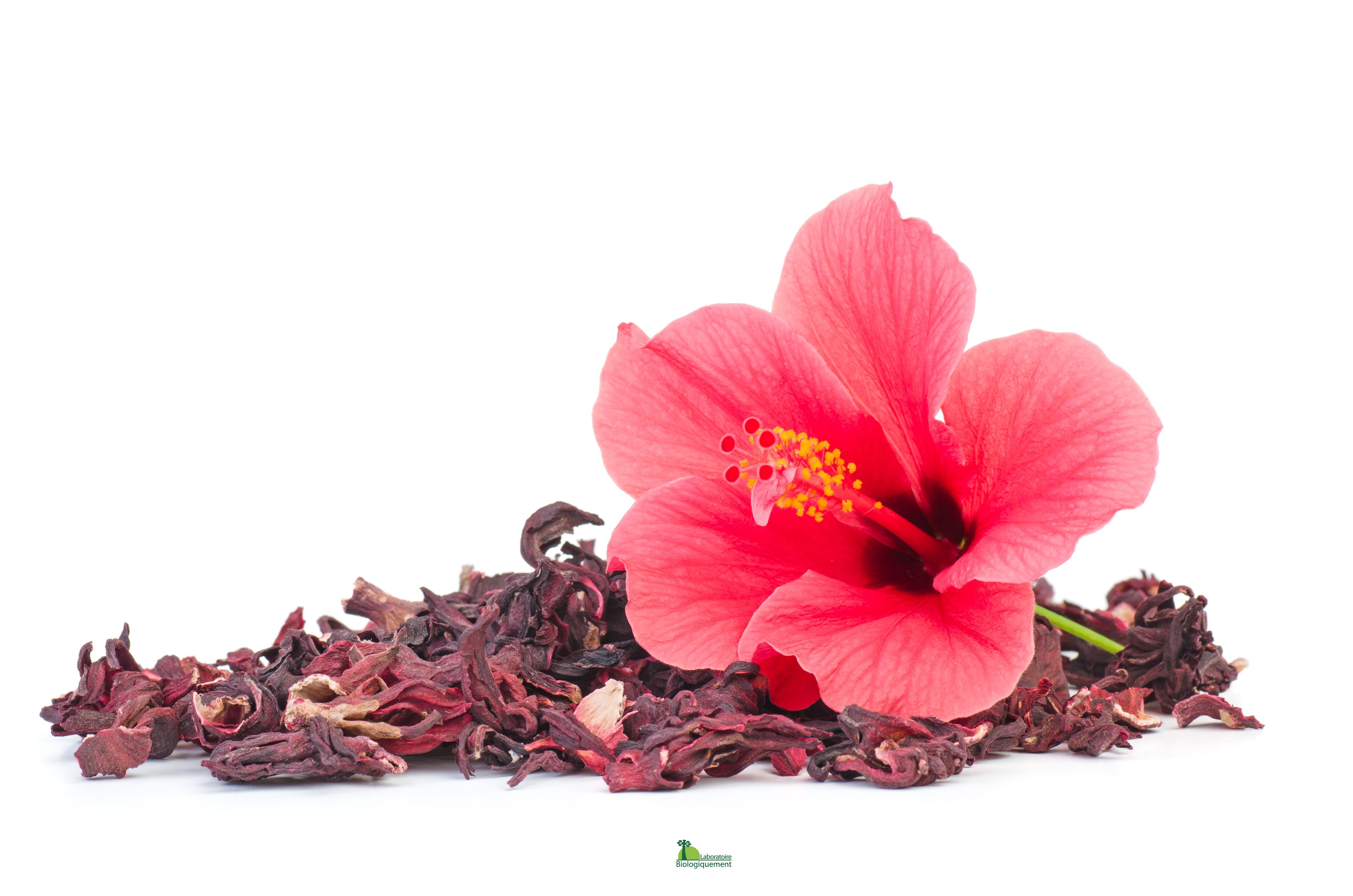 résultats de perte de poids de thé dhibiscus