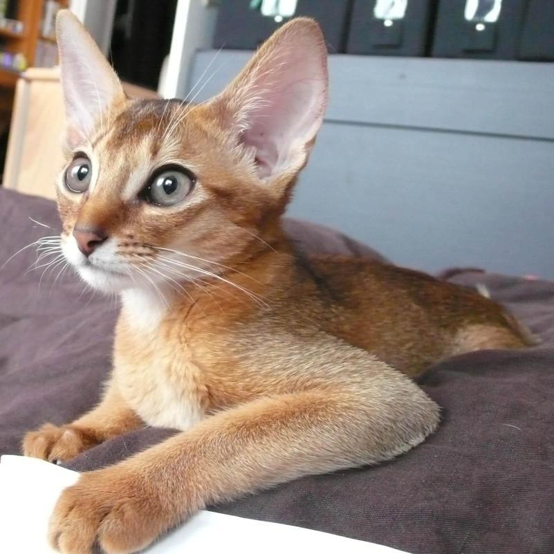Herpès virose du chat - Doctissimo