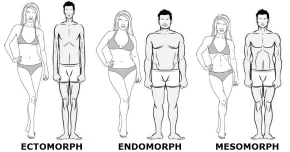 Endomorphe : transformez votre physique avec Nutriperfs ! - Nutriperfs