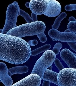 microbes intestinaux bons pour perdre du poids