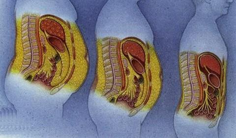 récepteurs alpha et bêta pour la perte de graisse la perte de poids aide-t-elle la fatigue surrénalienne